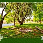Folk Summer Fest: расписание и размещение